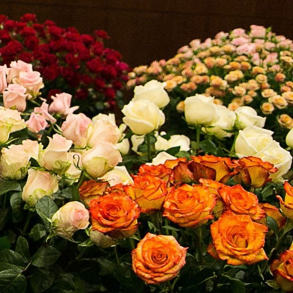 aboutflowers_valentinerosescolors600