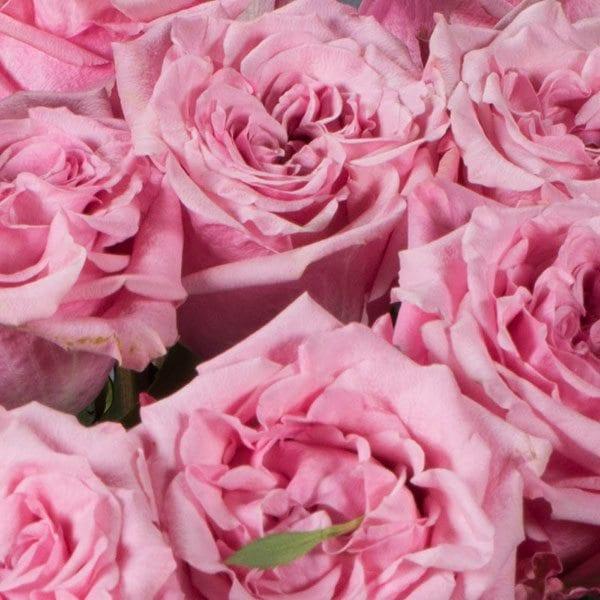 aboutflowers_valentinekrosespink600