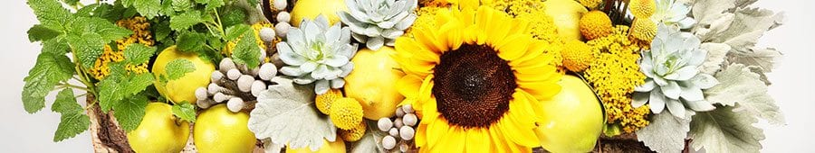 Sunflowers and lemons with dusty miller