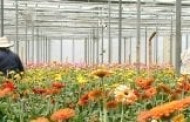 At Year's End, the Floral Industry Sees Results in Washington