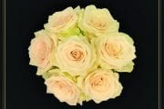 Rose Named for Beloved Floral Designer