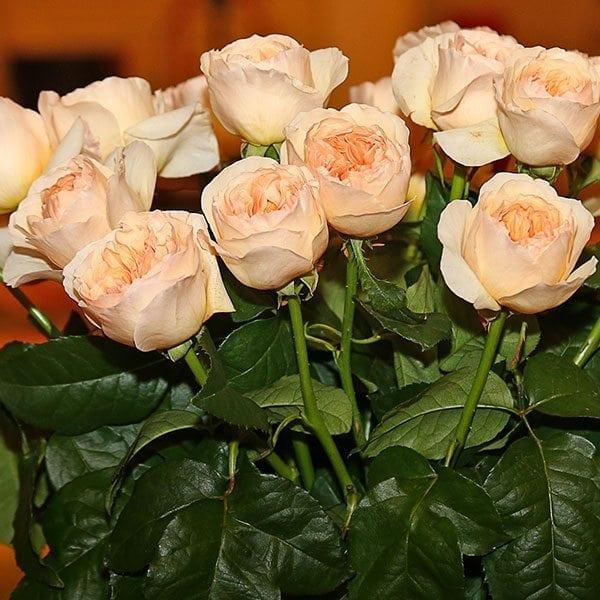 SAF OV 16 Best in Class - gardenrose - Juliet (Ausjameson) Green Valley Floral