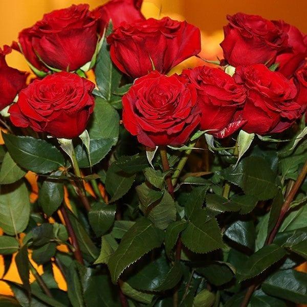 SAF ov16 - Best In Class - Rose, Black Pearl, Rosaprima International, LLC