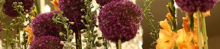 Purple Globes