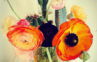 Share This: 23 Persuasive Reasons To Buy Flowers