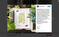 Captive Content: Beating the Instagram Algorithm