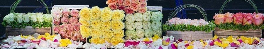Roses Display