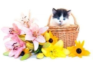Get the Word Out: No Lilies for Cats