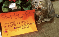 Feline Mascot Generates Goodwill, Foot Traffic for NYC Florist