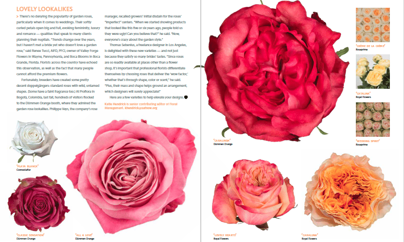 Lush, Untamed Roses to Delight Royal Admirers