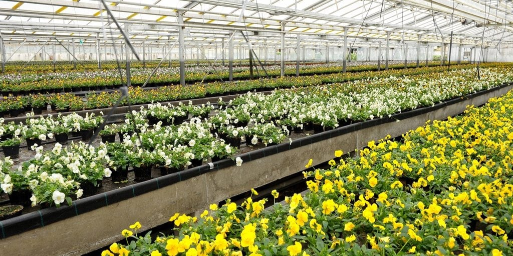 SAF Working to Protect Floral Innovation