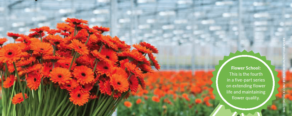 Ethylene can quickly shorten flower life and even destroy flowers