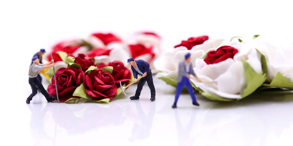 Miniature people : Team worker with Red roses and white roses on white backgroud, valentine day lover concept.