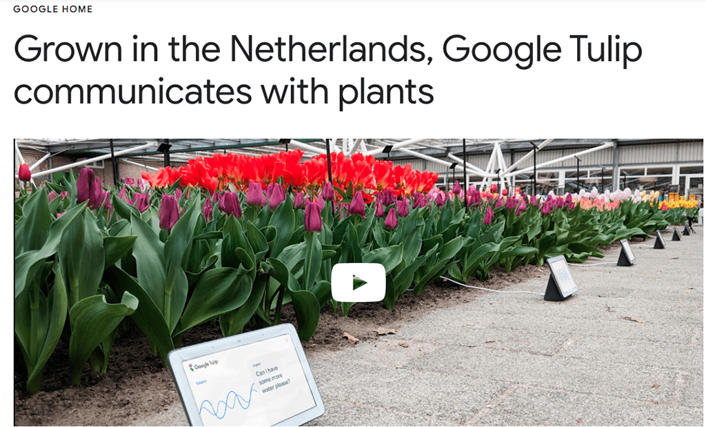 In Lighthearted April Fools' Video, Google Highlights Flowers