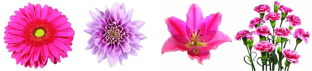 four kinds of pink flowers