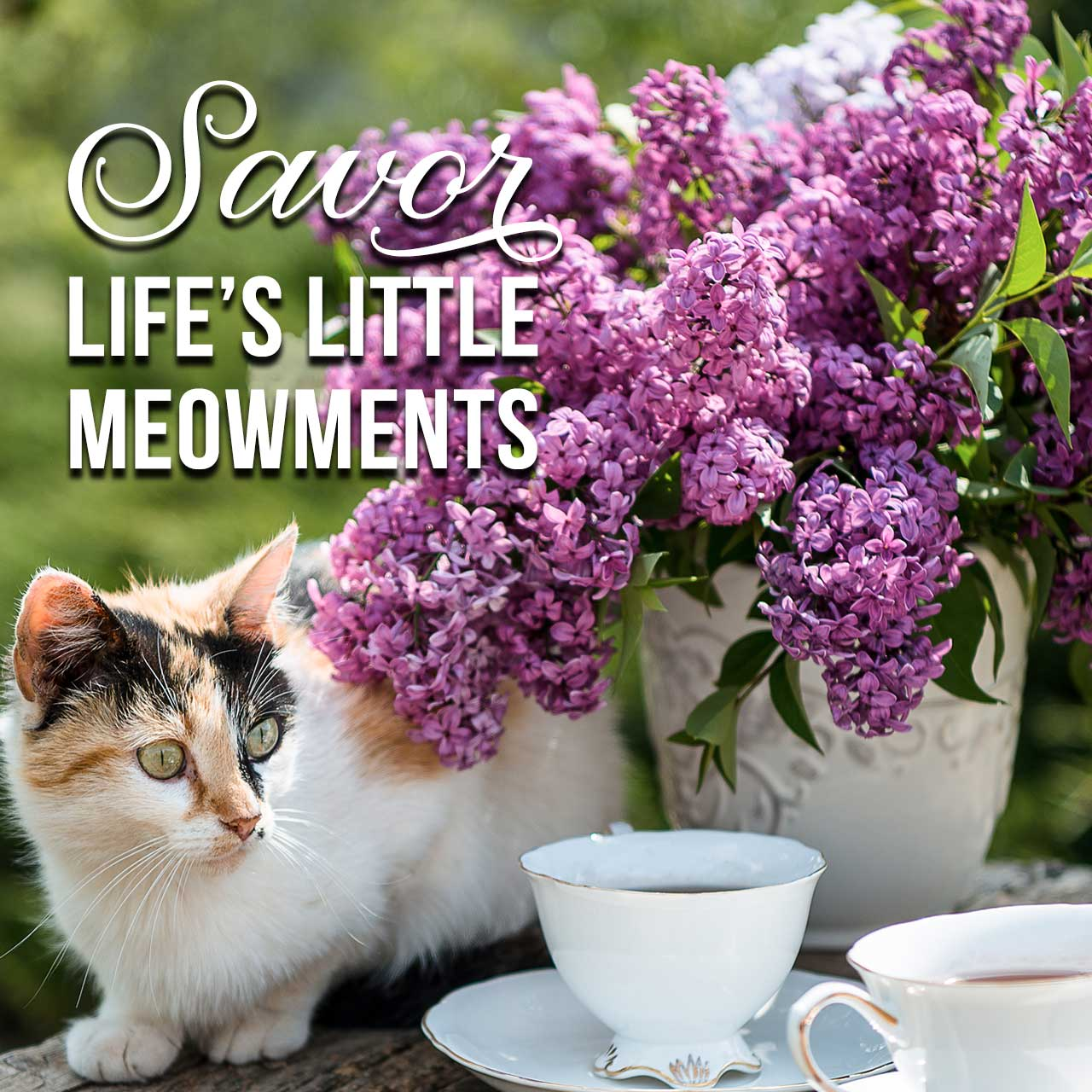 Savor Life's little Meowments