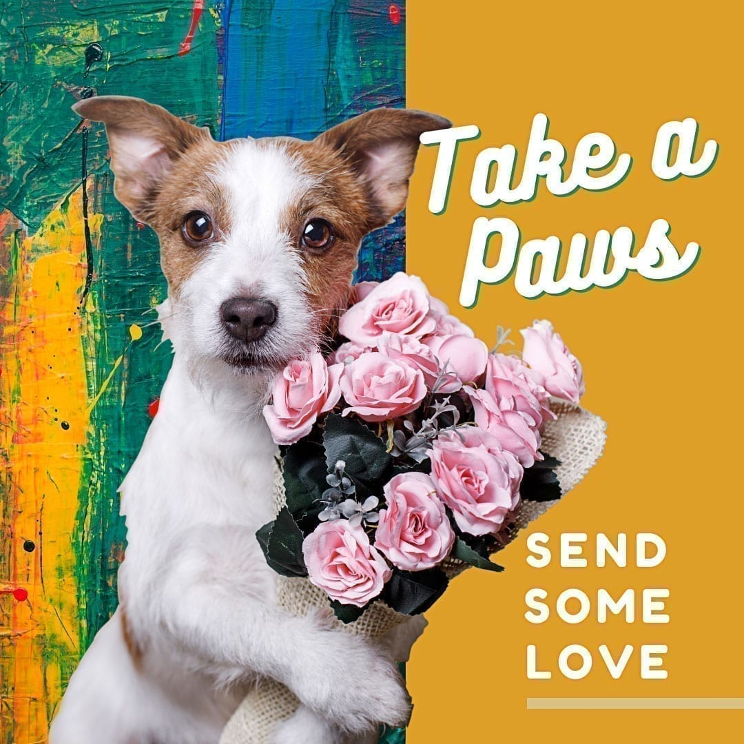 Take a Paws - Send some love