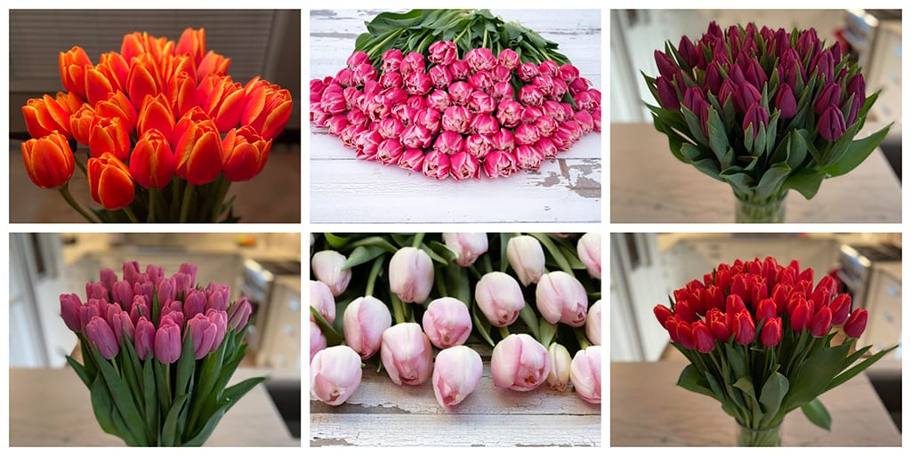 Feast Your Eyes on Transcendent Tulips